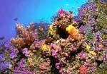 Мальдивы, подводный мир. Нажмите для увеличения изображения.